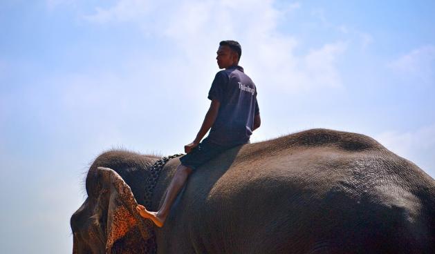 Elefantes cativos da Tailândia enfrentam a fome