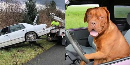 homem-entra-em-perseguicao-policial-e-e-preso-apos-tentar-ensinar-cachorro-a-dirigir
