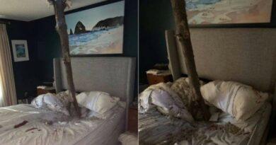 parte-de-arvore-cai-atravessa-telhado-e-fica-cravada-no-meio-de-cama-entre-casal